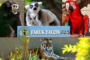 Зоопарк Стамбула - многообразный мир животных
