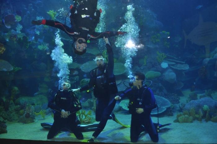 Представление аквалангистов