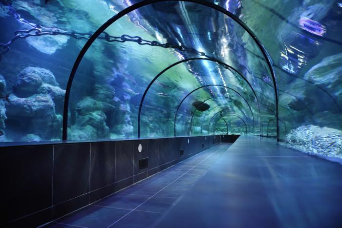 Туннель с рыбками