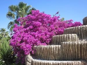 Цветущий Мармарис летом