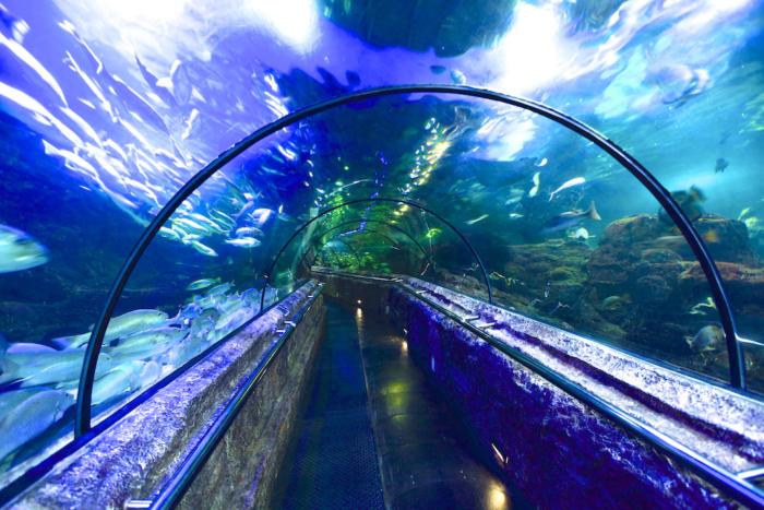 Тоннель в океанариуме Sea World в Джакарте