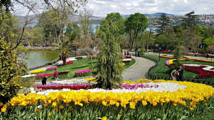 Желтые тюльпаны в парке и аллеи