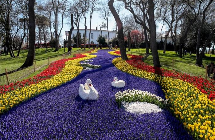 Лебеди на поле из сиреневых тюльпанов